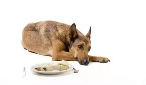 【宠医在线】狗狗呕吐怎么治疗?