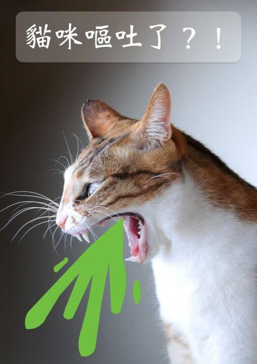【豆柴宠物在线问诊】猫咪呕吐是怎么了?