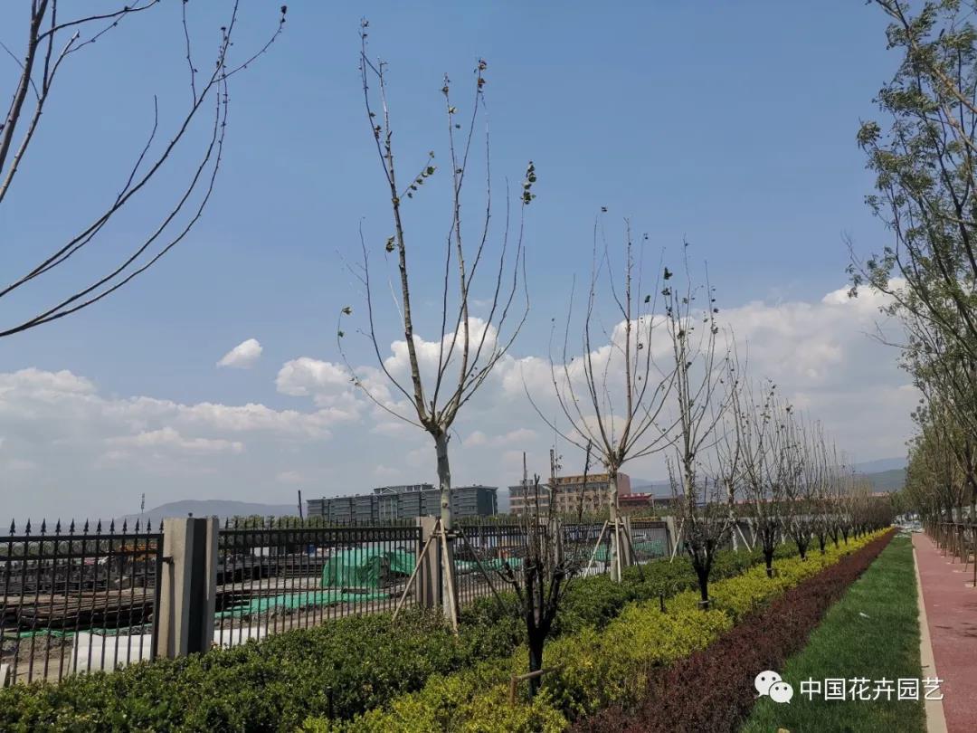 栽树木夏季养护