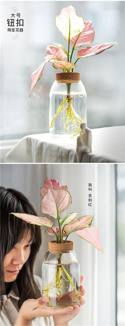 日式简约玻璃花瓶_透明水培植物花器
