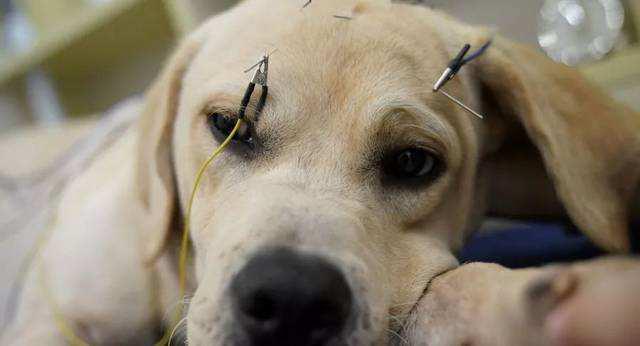 【宠医在线咨询】如何把狗狗肠胃养好
