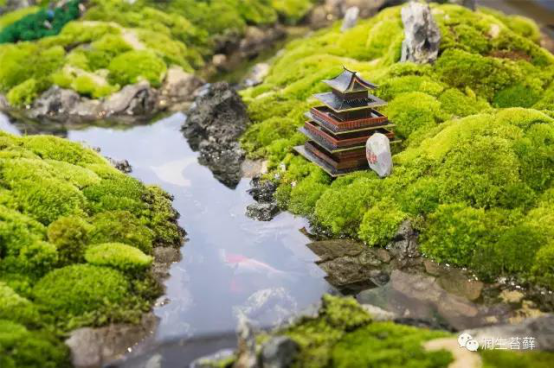散发着安静力量的苔藓,美了一方小院