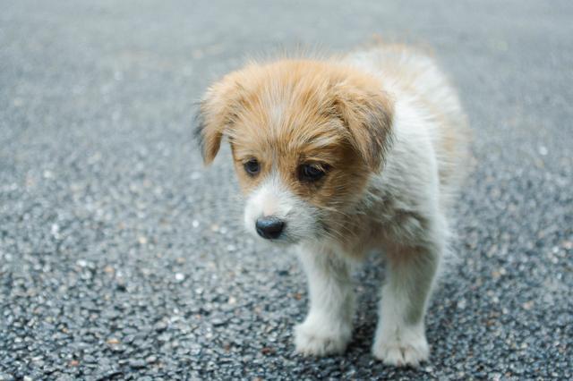 【宠医论坛资讯】如何防止狗狗皮肤病?