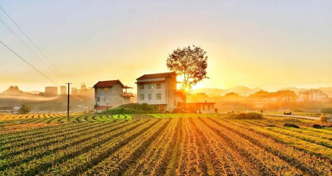 农村新规!政府两部门通知:保障村民住宅用地,不得强制农民搬迁和上楼居住