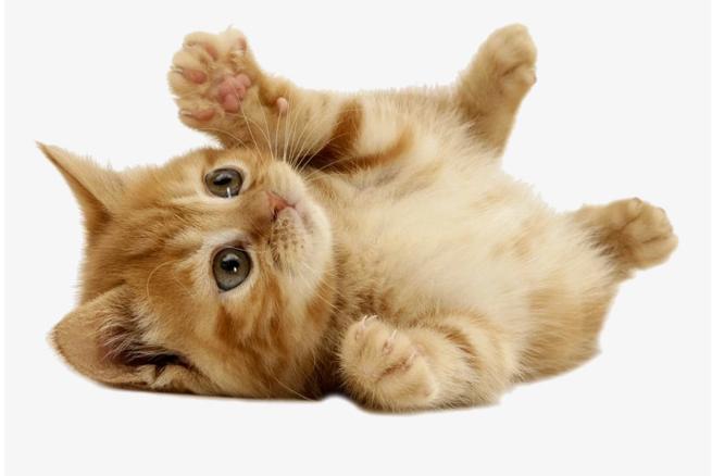 【宠物疾病咨询】如何区分猫瘟和猫肠胃炎?