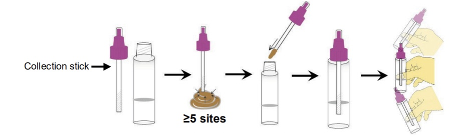 H. pylori Ag Rapid Test