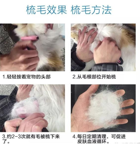 【宠物生病咨询】如何梳理狗狗的毛发比较合适?