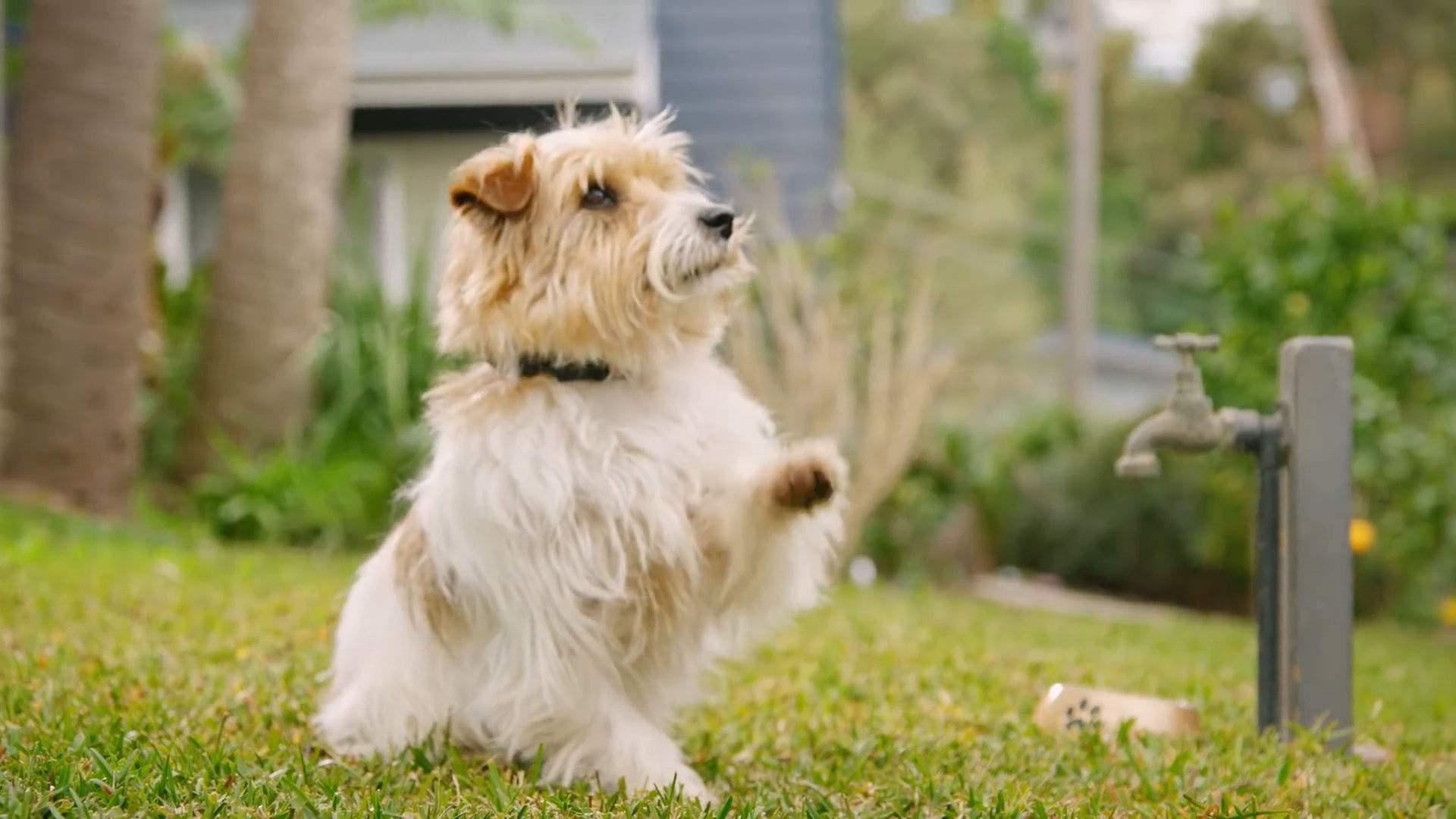 【宠物医生咨询】如何改善狗狗的肠胃?