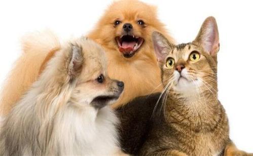 宠物除臭剂