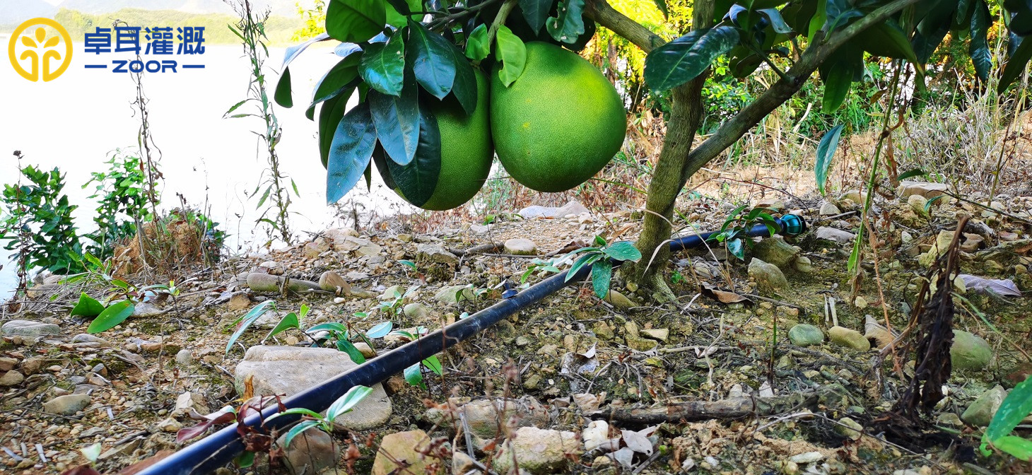 通山板桥枇杷基地智慧水肥一体化示范项目
