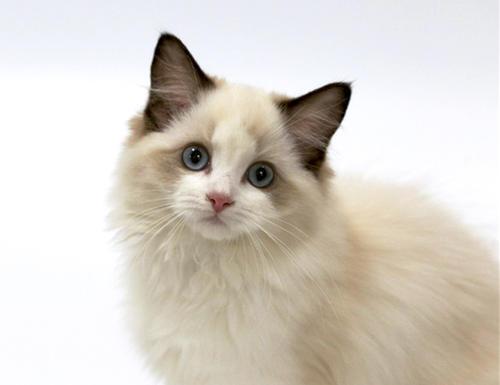 【在线宠医咨询】给猫看病不花钱?知名宠物医生在线解答
