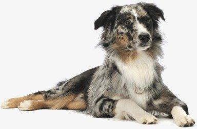 【狗狗在线问诊】你知道的宠物医院看病,价格算贵吗?