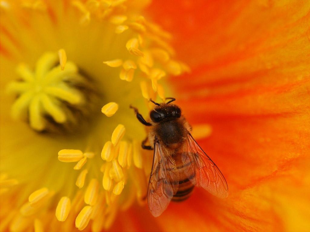 花粉营养价值分析,小花粉有大讲究!