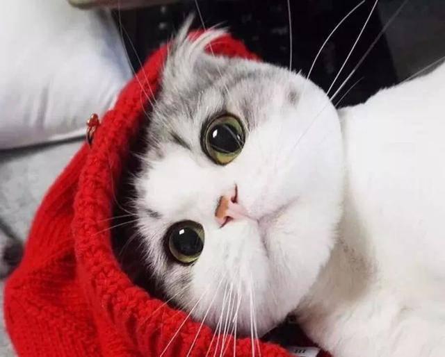 【在线宠医咨询】猫猫的一些常用品,你购买正确了吗?