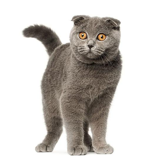【在线宠物医生咨询】如何辨别猫咪的健康情况