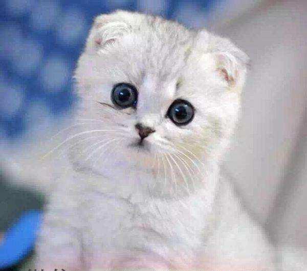 """【宠物在线医院】如何看待""""给猫看病被黑心宠物医院坑钱""""?"""