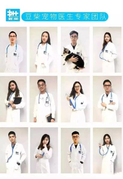 """【宠物医生在线咨询】为什么很多宠医门店比较""""黑""""?"""