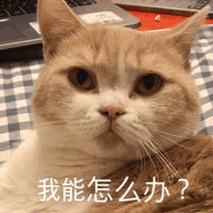 【在线宠物医生】为什么猫咪明明吃得很多,却不见长胖呢?