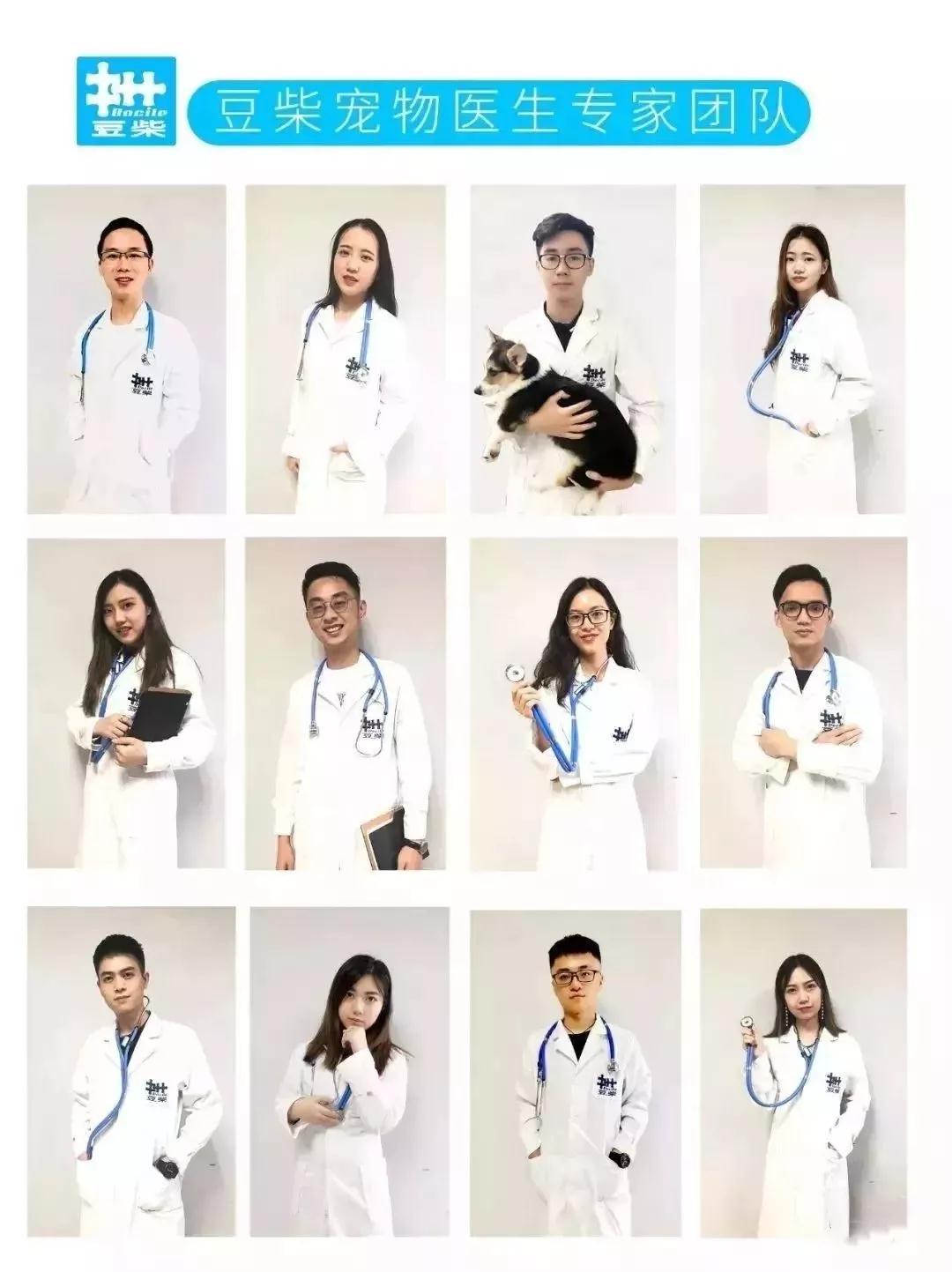 【宠物医生咨询】猫咪拉稀了,到底该怎么办?