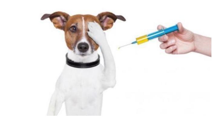 【宠物医院】咨询在线宠医,需要注意哪些问题?