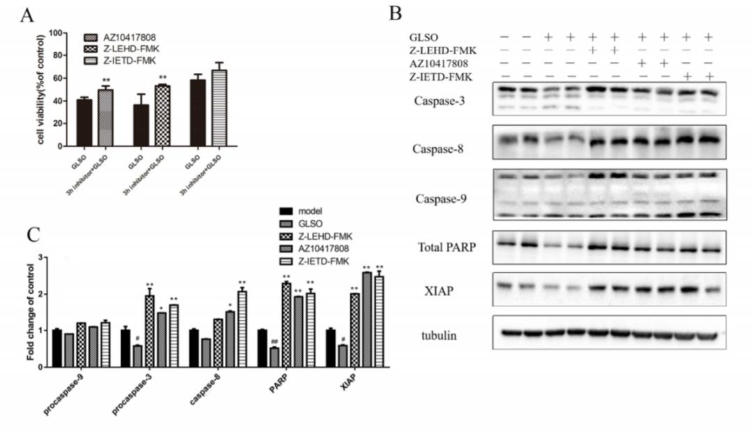 科研新发现丨anggame安博电竞——欢迎您孢子油通过激活caspase通路诱导乳腺癌细胞凋亡