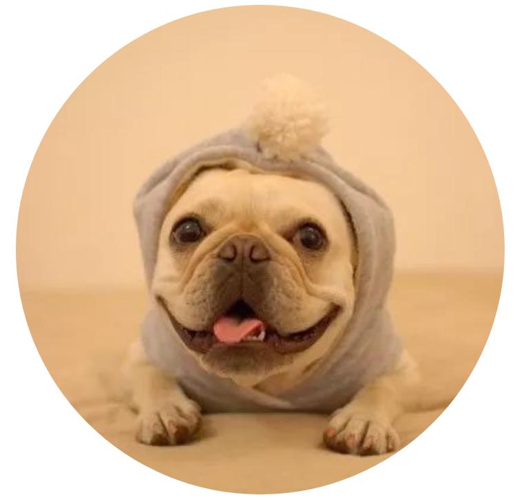 【宠物在线咨询】如何能够让狗狗能够快速长胖