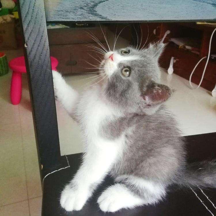 【宠物医生在线咨询】最近猫咪老是流口水,是否是因为生病了?