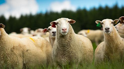 """传说中的""""全羊盛宴""""?绵羊奶品牌谱恩今天带你一站看齐!"""