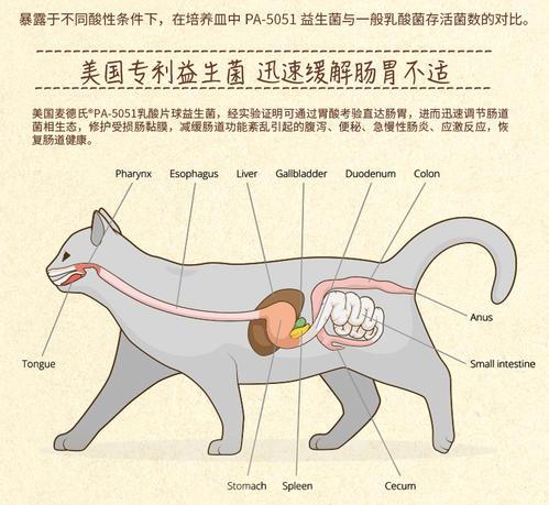 【在线宠物医生】解答:猫咪呕吐的原因