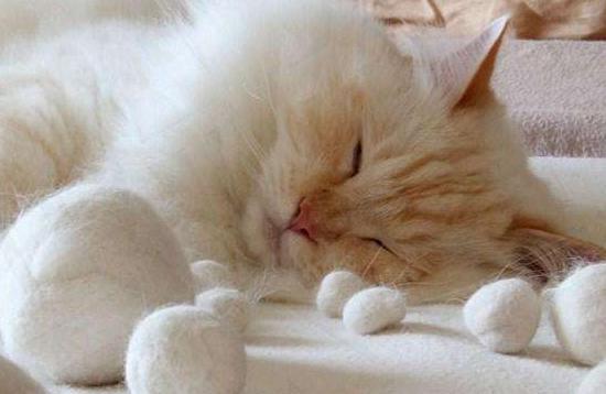 【在线宠物医生咨询】如何处理掉毛的猫猫