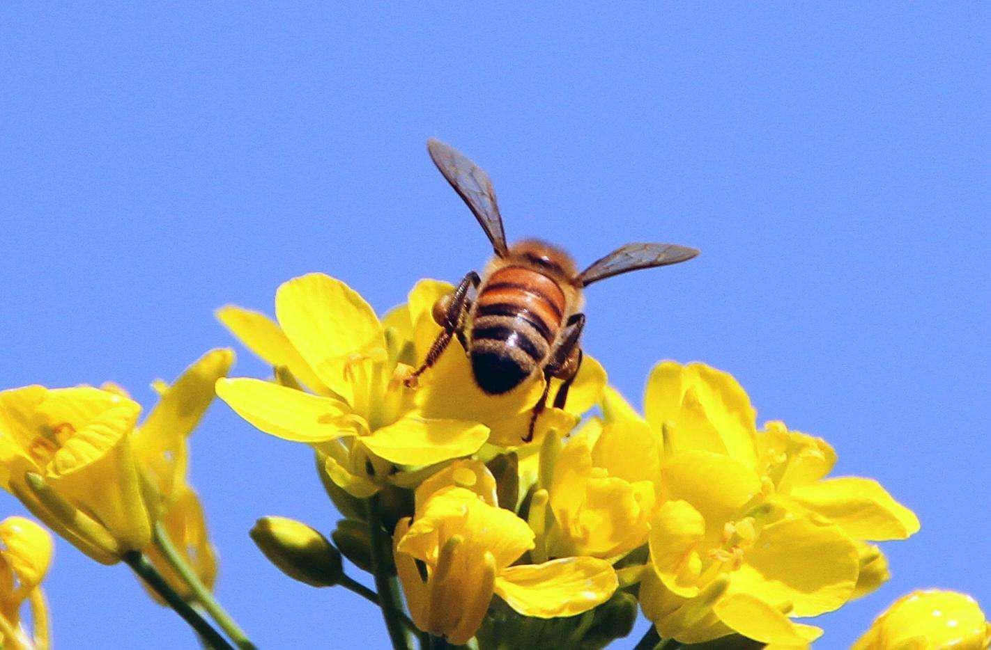 """不为人知的""""元素营养库"""",小花粉带来的大改变"""