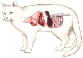 【在线宠物医生咨询】猫咪肠胃太娇贵,养食应有法