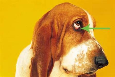 """【宠物在线咨询】记住这些小举动,狗狗发出的""""危险警告""""!"""