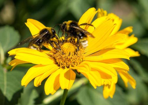 现代花粉的研究与应用