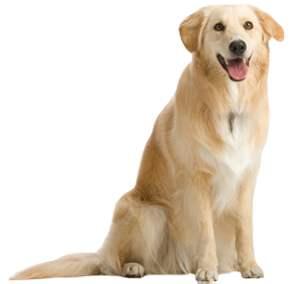 【在线宠物医生咨询】狗狗螨虫性皮肤病的征状与治疗方式