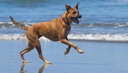 【在线宠物医生咨询】狗狗真菌性皮肤与爪部皮肤病症状与处理方式