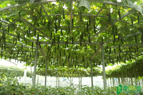 安徽遠創水肥一體化灌溉系統