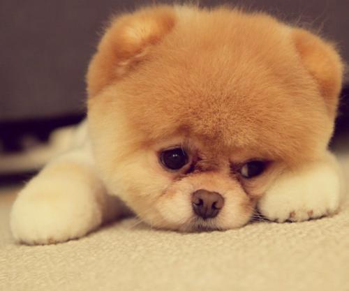 【宠物医生在线咨询】狗狗的一些非典型症状皮肤病