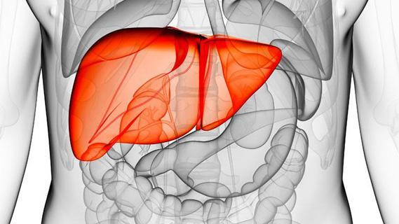 萃养元:养肝更护肝,小花粉让你的肝脏去除后顾之忧