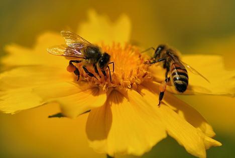 花粉口服液,为什么还是得看萃养系列?