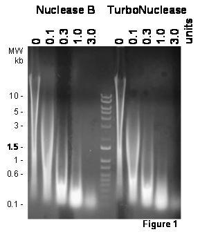 TurboNuclease内切核酸酶