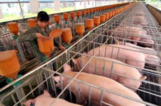 國辦印發《關于促進畜牧業高質量發展的意見》