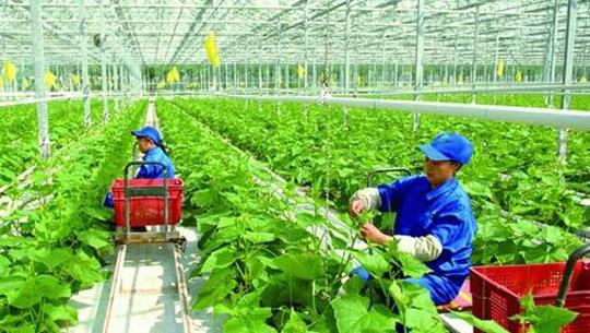 我國積極推進農業物聯網建設 實現高效管理