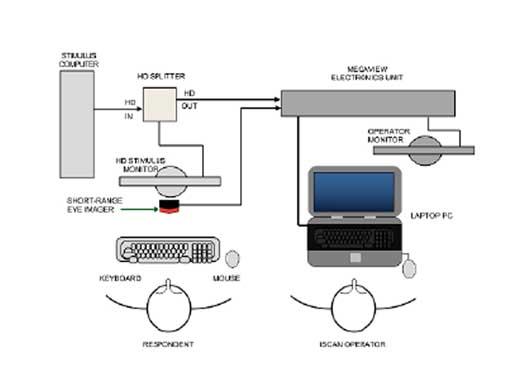 ETL-300 遥测式双目眼动追踪系统