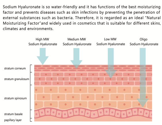 Cosmetic Grade Sodium Hyaluronate