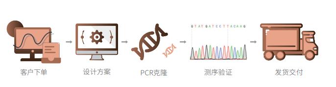 PCR克隆