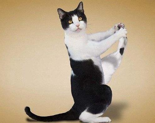 瘦身瑜伽真的可以瘦身吗