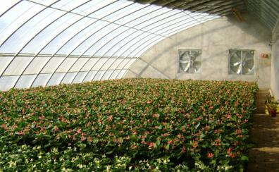 冬季大棚種植的六大誤區