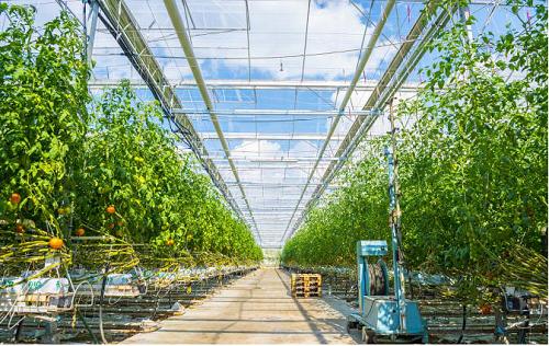 农业农村部印发《全国乡村产业发展规划(2020—2025年)》