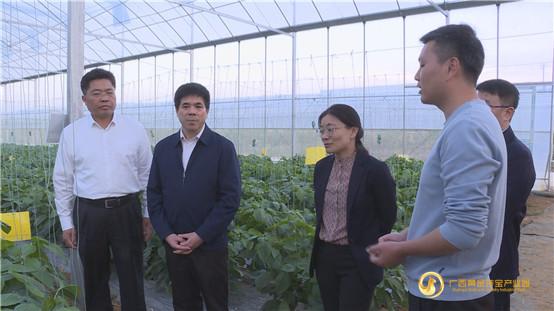 广西自治区农业农村厅领导文信连到平桂区开展产业扶贫调研
